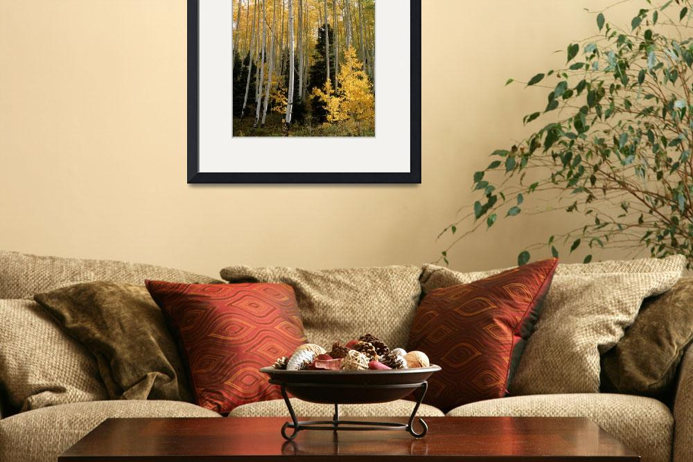 """""""Young Aspens&quot  (2008) by EricGlaser"""