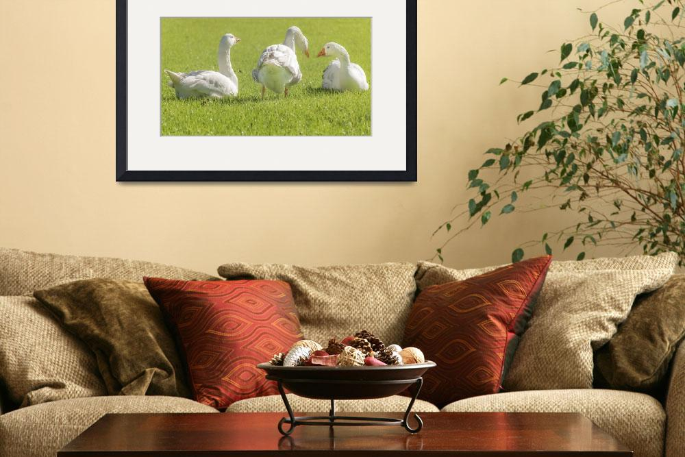 """""""Group of White Geese Resting on the Grass&quot  (2015) by danfleitesart"""