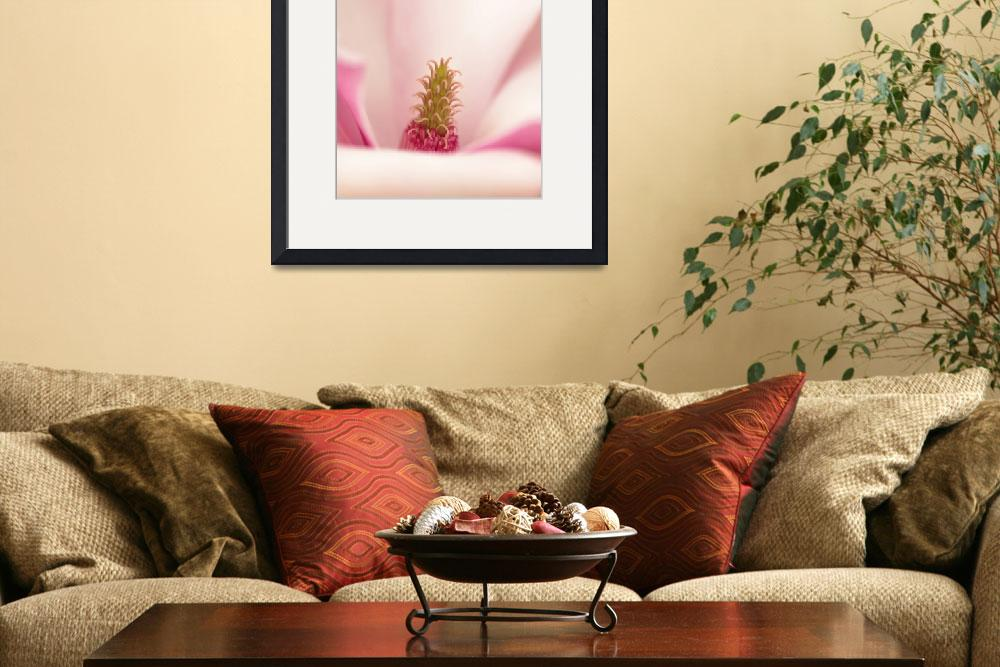 """""""magnolia""""  (2011) by photoplace"""