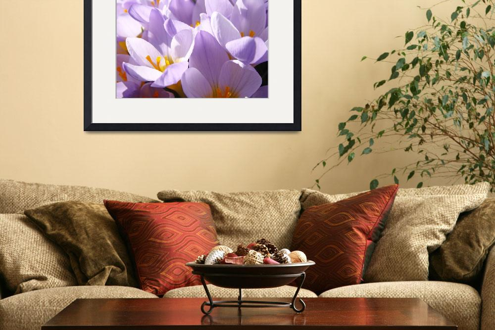 """Crocus Spring Flowers Glowing Floral Art Prints""  (2014) by BasleeTroutman"