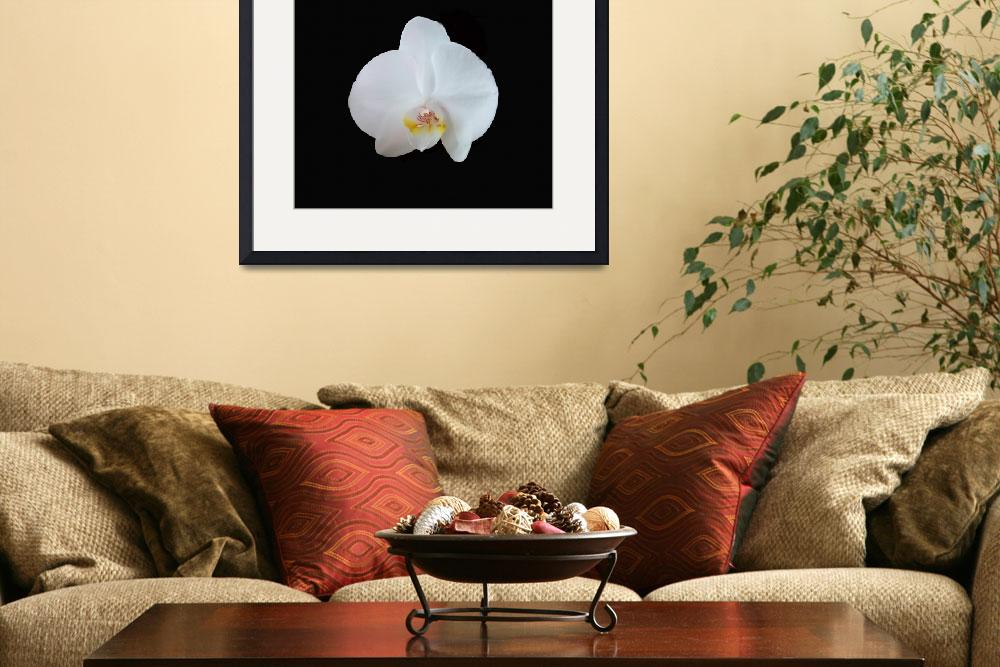 """""""Dramatic single white orchid&quot  (2018) by NormaStampSunnyDaze"""