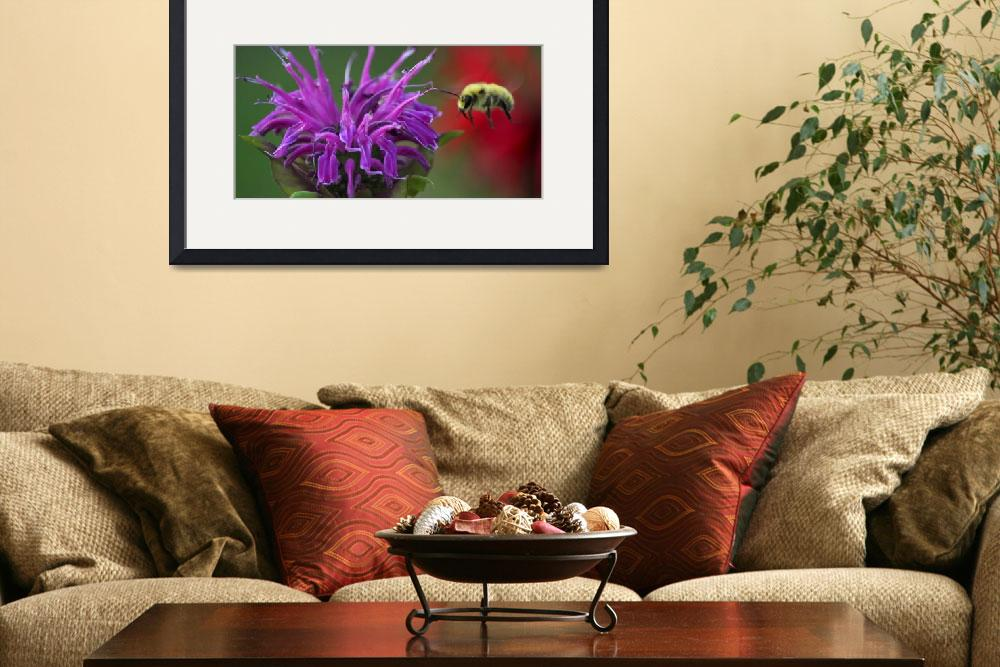 """Bee and the Beebalm&quot  (2012) by gc_photos"