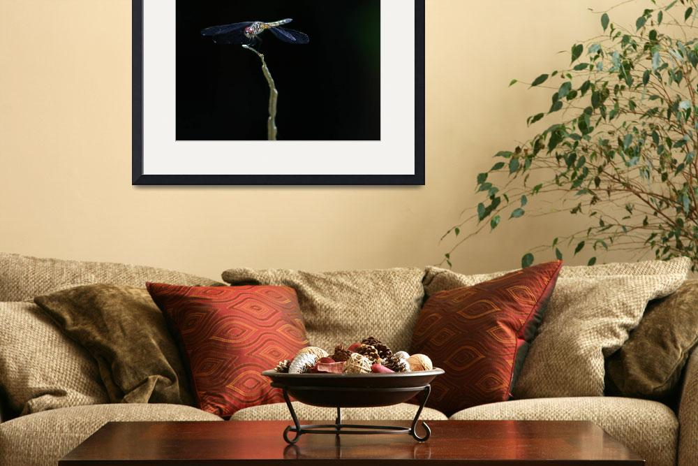 """""""Dragonfly perch, dark background.&quot  by unclaimedmysteries"""