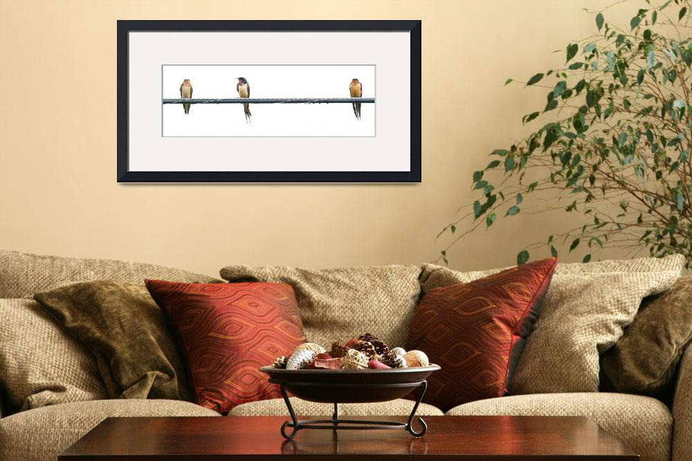 """""""Barn Swallow Family on a Cable&quot  (2014) by NatureAsArt"""
