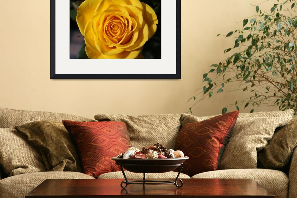 """""""Yellow rose&quot  by DPWphotography"""