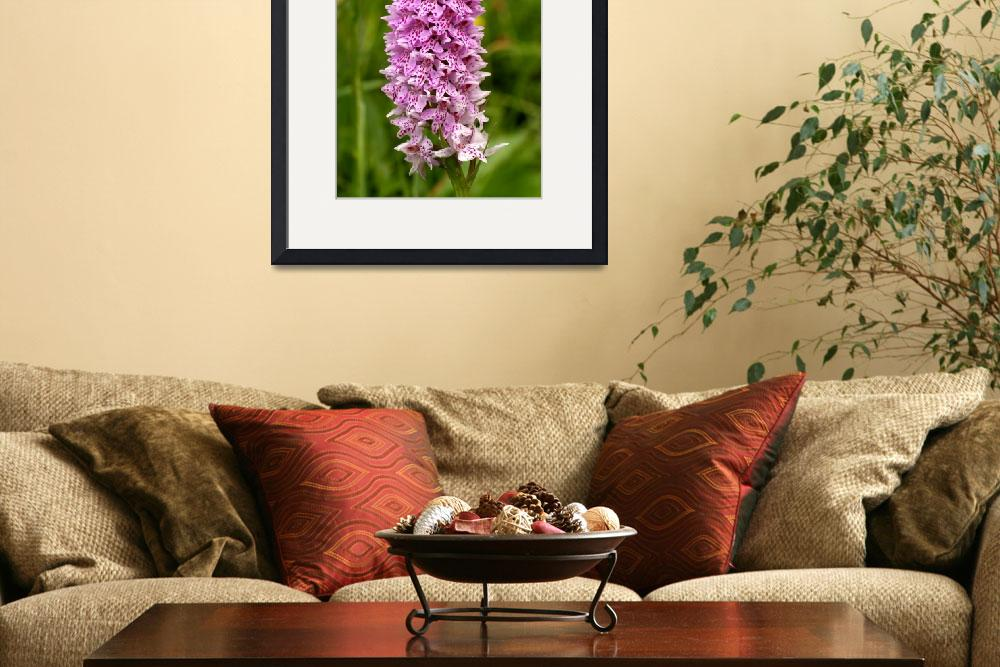 """""""Common Spotted-orchid&quot  (2008) by roger"""