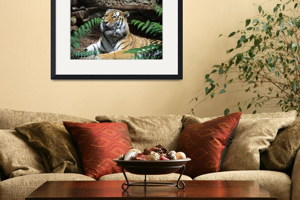"""""""Tiger""""  (2008) by crazydaisy31"""