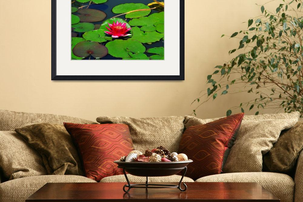 """""""Magenta lily in water""""  (2007) by amira"""