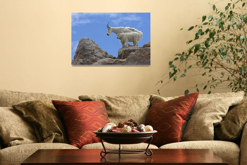 """""""A mountain goat nanny and her kid balance on the r""""  by DesignPics"""