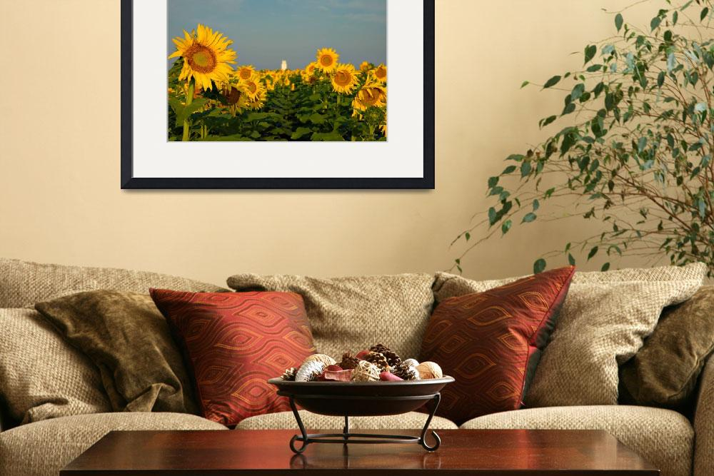 """""""Amarillo Sunflower Rise&quot  by jwoodphoto"""