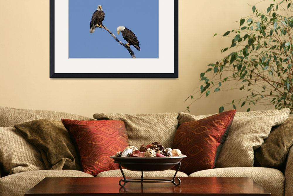 """""""Bald Eagle Pair&quot  by cameragal"""