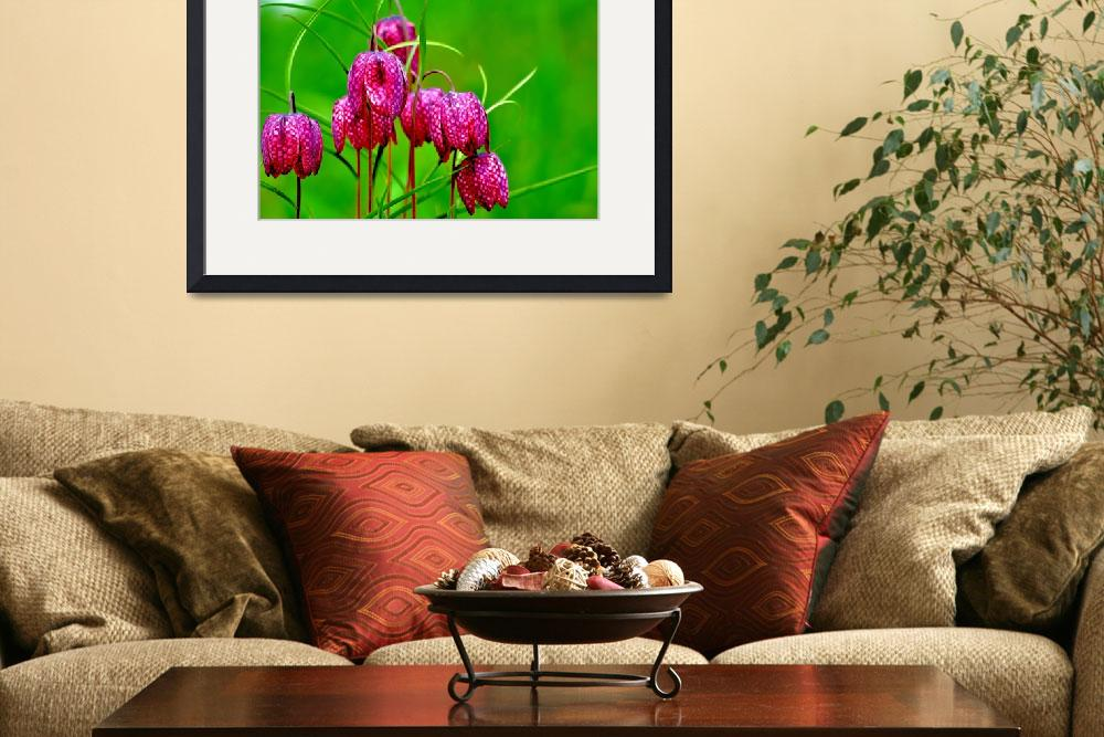 """""""Pink Fritillaries&quot  (2014) by joanhan"""