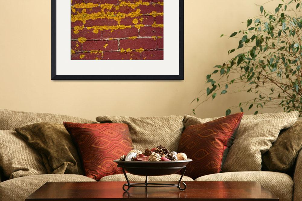 """""""Lichen on brick wall&quot  by Panoramic_Images"""