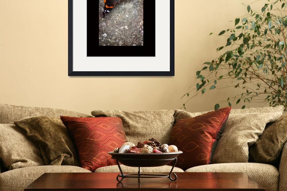 """""""Red Admiral Butterfly with Black Border&quot  (2015) by KsWorldArt"""