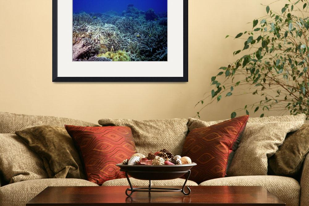"""""""Staghorn Corals at the Bay, Alive&quot  (1992) by JoaoPonces"""