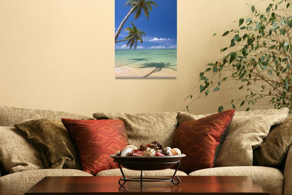 """""""Palm Trees Lean And Cast Shadow On Beach With Turq&quot  by DesignPics"""
