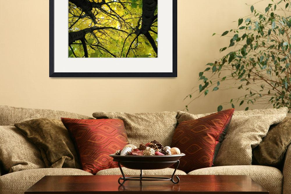 """""""Norway Maple&quot  (2008) by 4ember"""