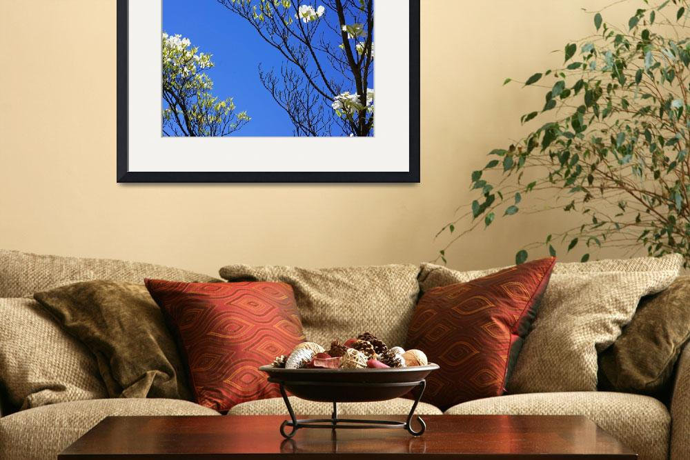 """""""Blue Sky Art Prints Dogwood Tree Branches Flowers&quot  (2014) by BasleeTroutman"""