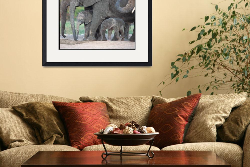 """""""African Elephant Herd&quot  by PaulSelvaggio"""