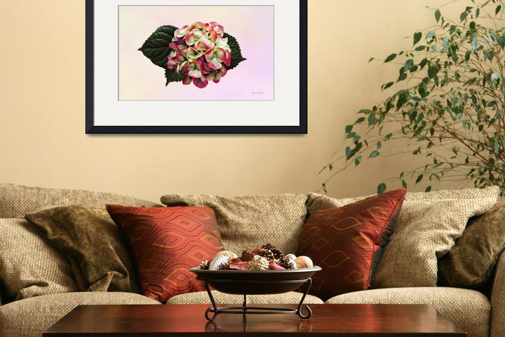 """""""One Pink and White Hydrangea""""  by susansartgallery"""