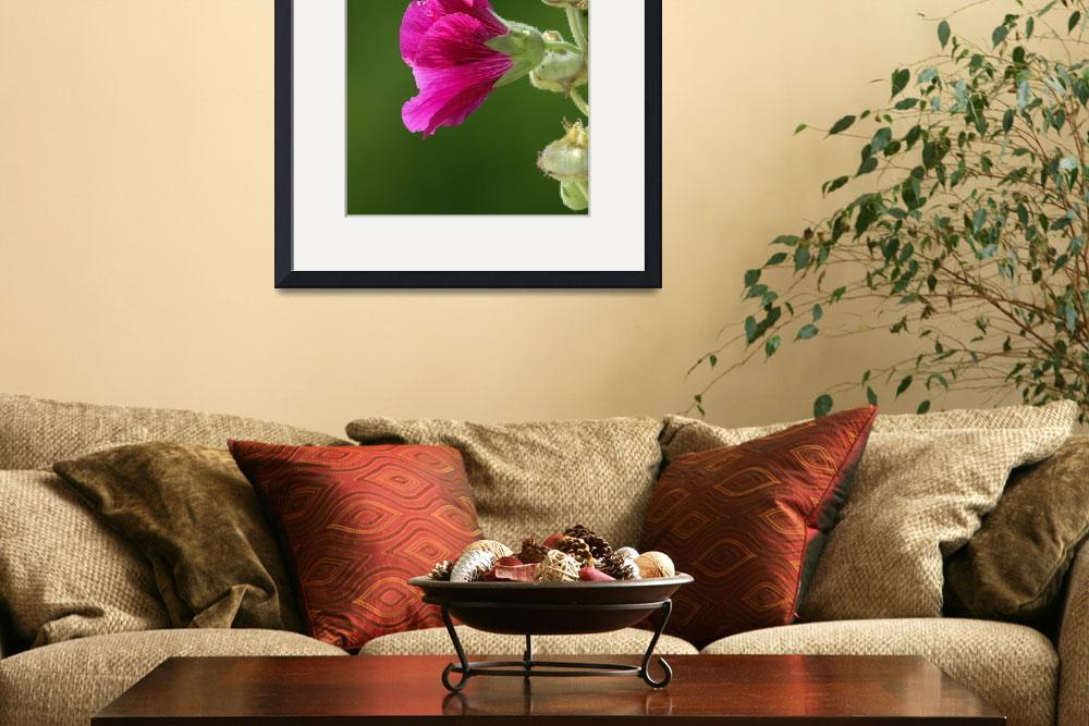 """""""Hollyhocks 1627""""  by Tanager"""