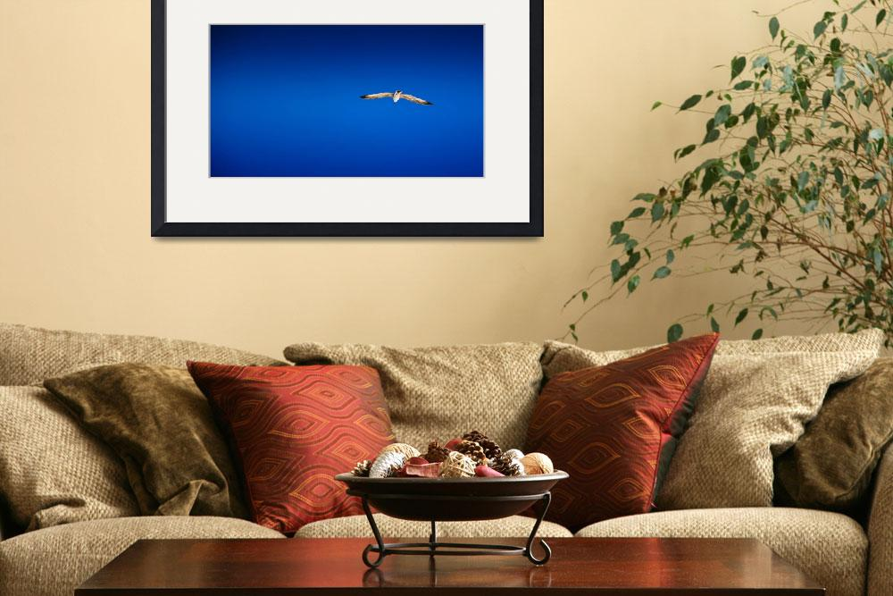 """""""Seagull against the blue sky&quot  (2011) by AndreyOSP"""