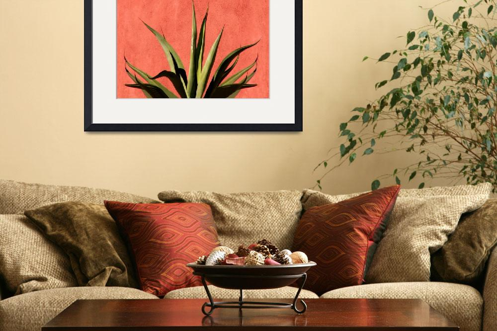 """Agave on Red Stucco""  (2007) by lisakhering"