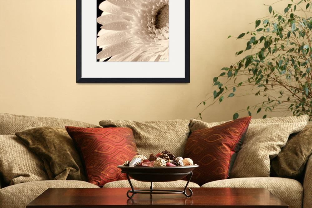 """""""White Gerbera Sepia&quot  (2009) by cate"""