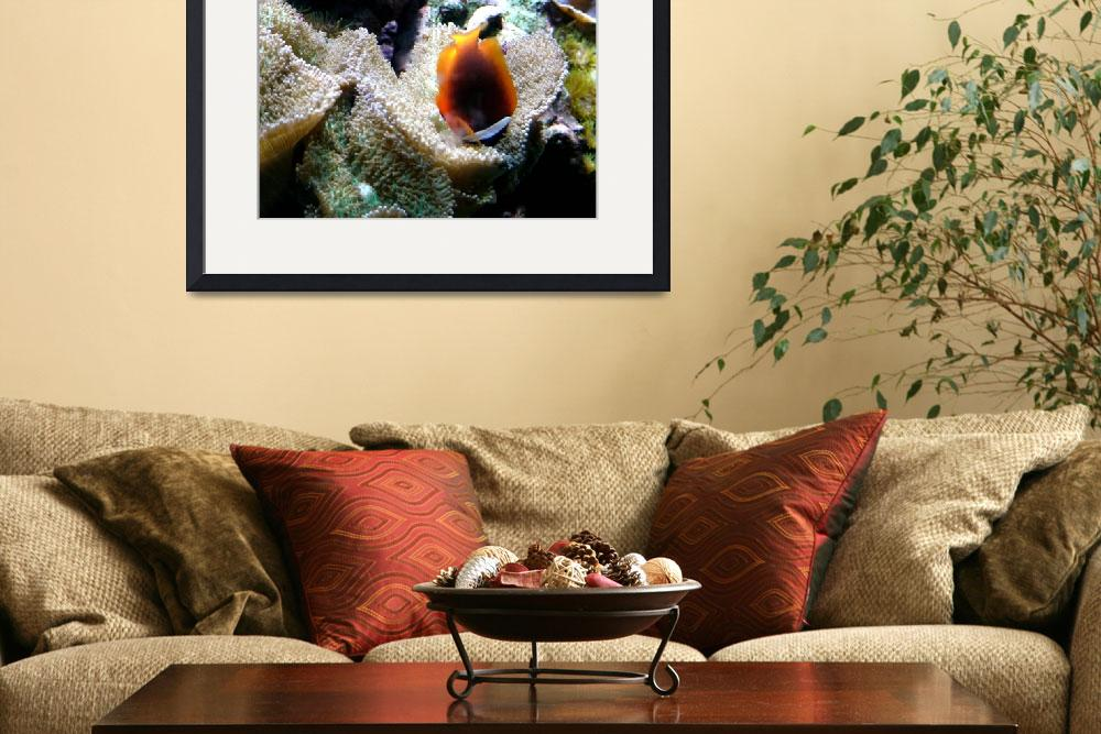"""Clown Fish in Bed of Coral&quot  (2009) by paulyworksfineart"