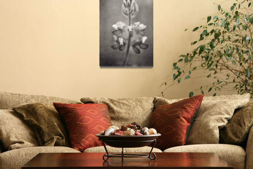 """""""lupine in black and white&quot  by Piri"""