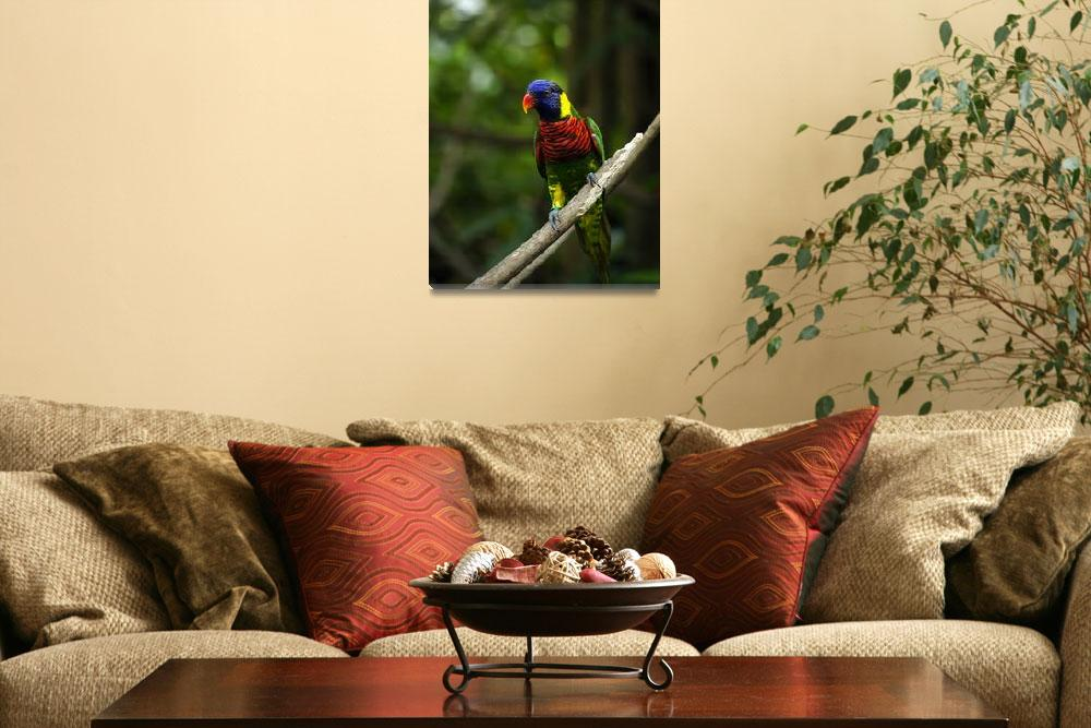 """""""Rainbow lorikeet bird with colorful feathers.&quot  by Todikromo"""