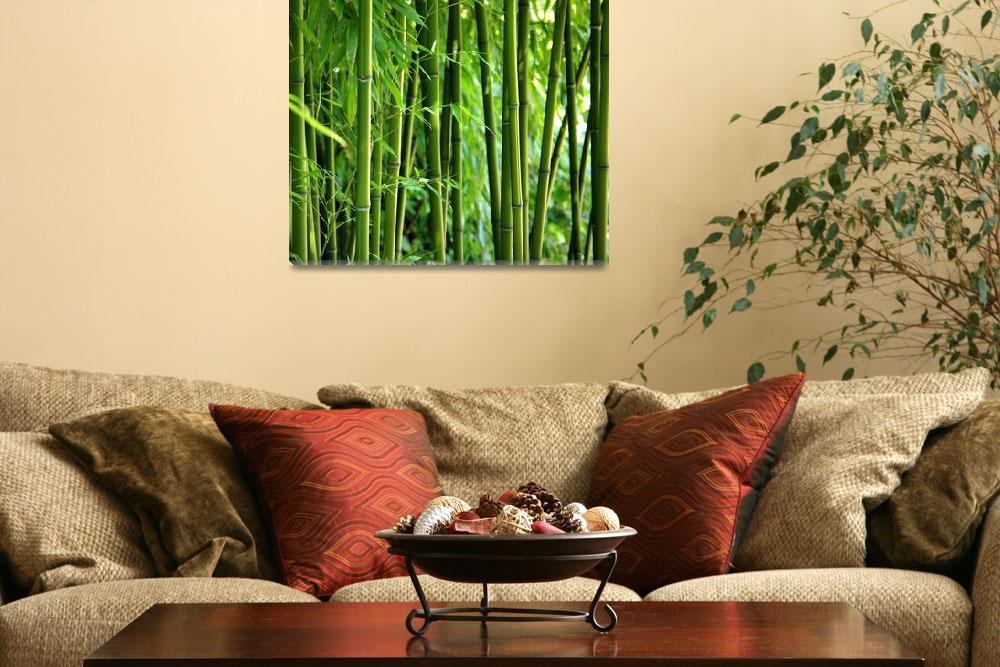 """Bamboo""  (2012) by gabii40"