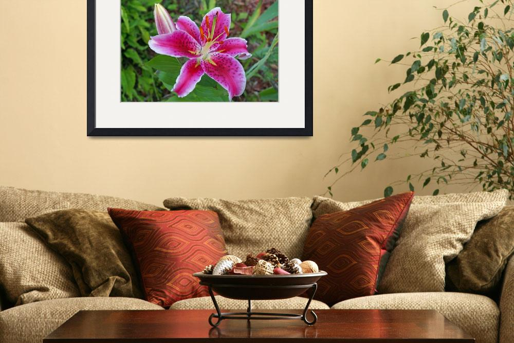 """""""Pink Day Lily&quot  (2008) by LHPhotography"""
