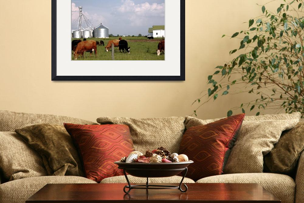 """""""Milk Cows Grazing Down On The Farm""""  (2010) by fotobits"""