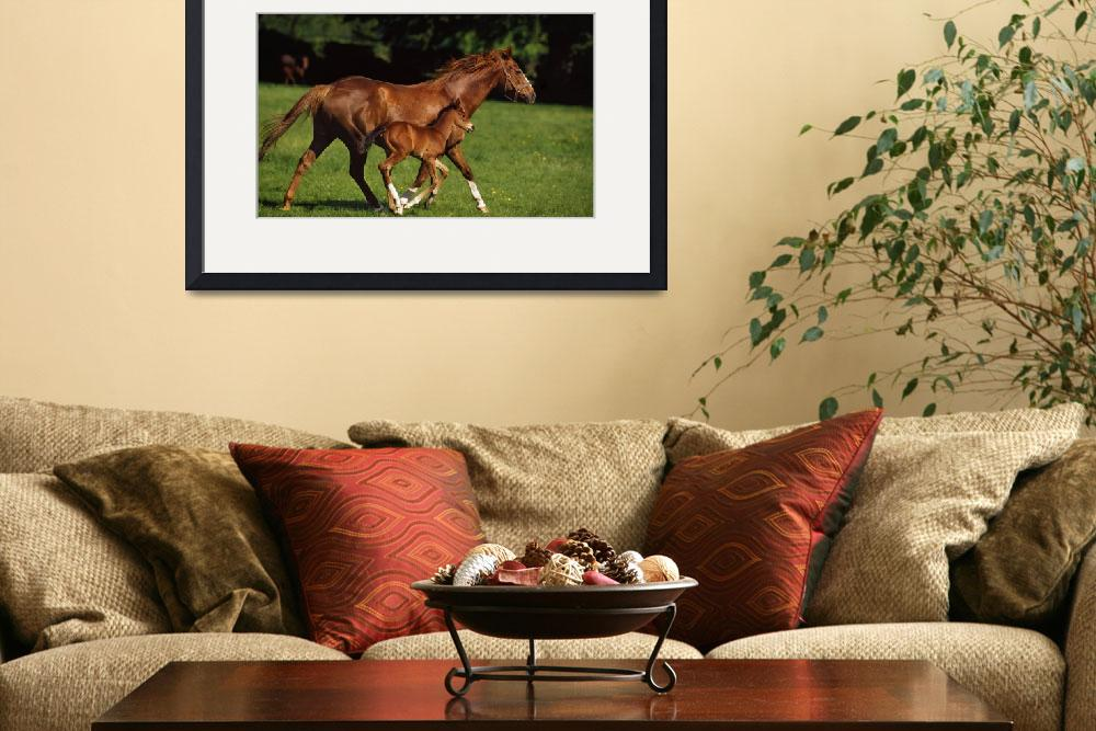 """""""Thoroughbred Chestnut Mare and Foal, Ireland&quot  by DesignPics"""