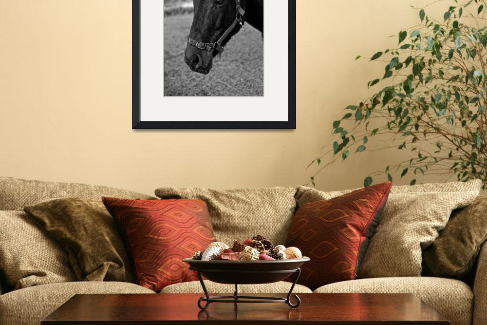 """""""The Black Horse&quot  (2010) by PetrStary"""