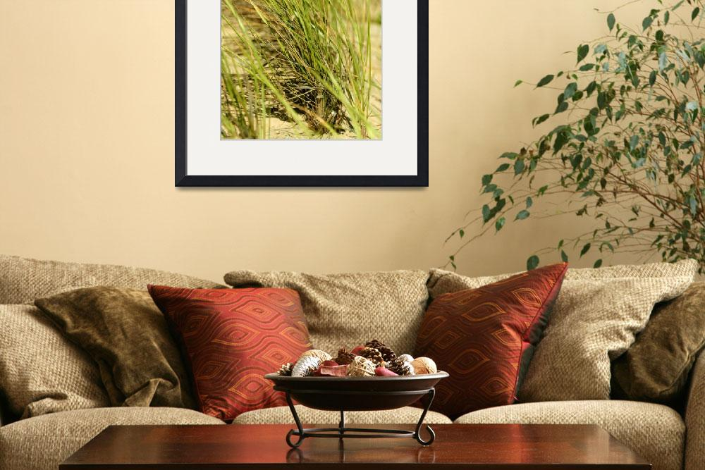 """""""Beach Grass&quot  (2009) by rayjacque"""