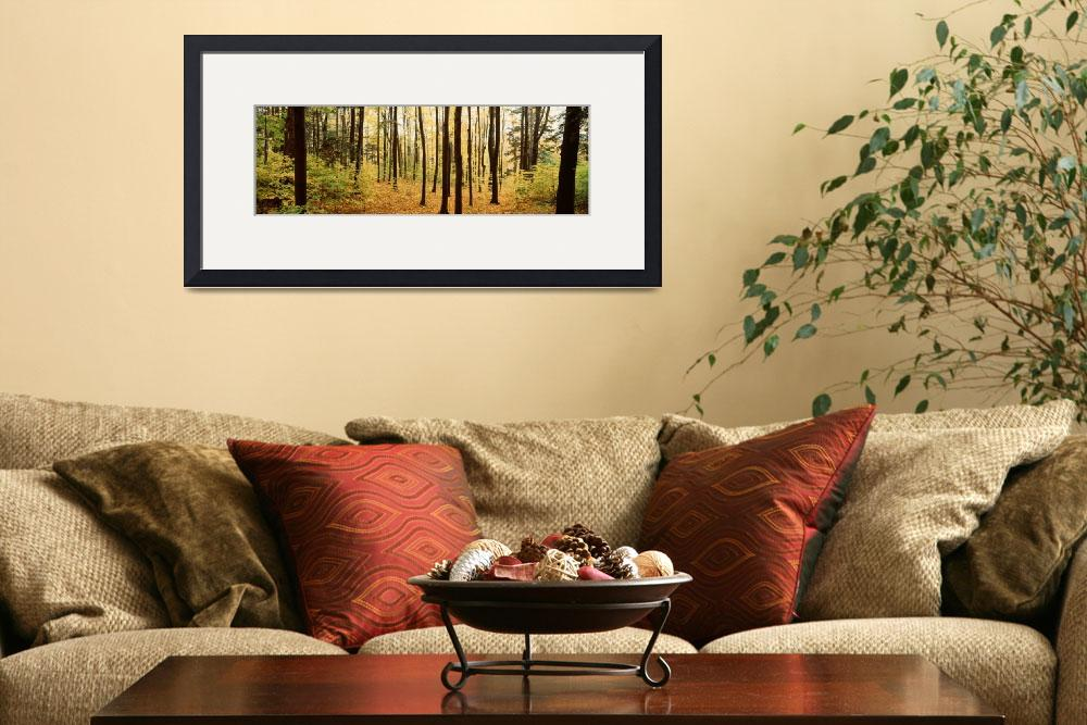 """""""Trees in a forest&quot  by Panoramic_Images"""