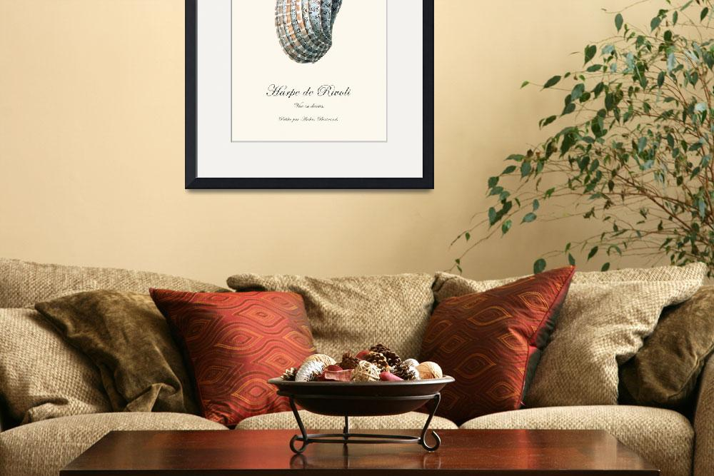 """""""Sea shell harpe vintage poster natural history&quot  (2012) by Lebonvintage"""