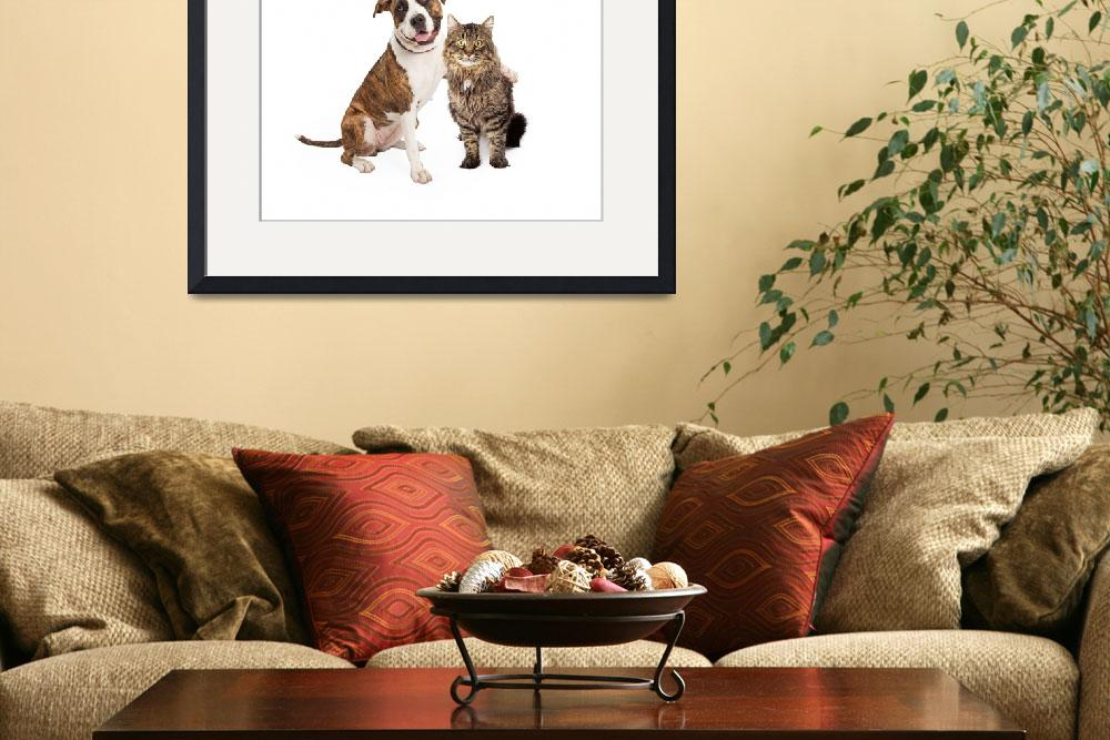 """""""Dog Arm Around Tabby Cat&quot  by ADogsLifePhoto"""