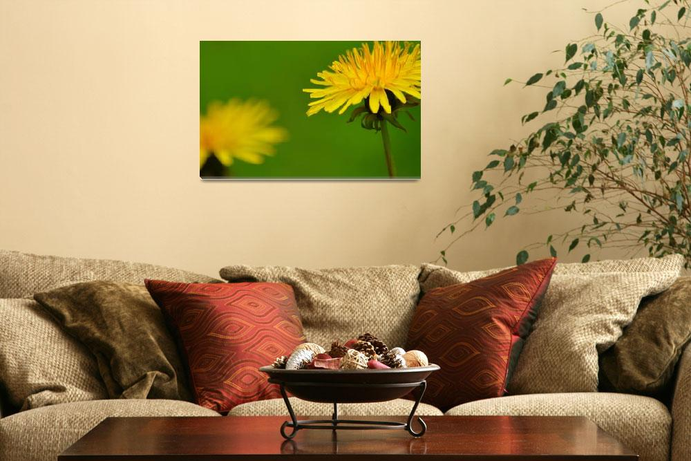 """Yellow Dandelion""  (2014) by joanhan"