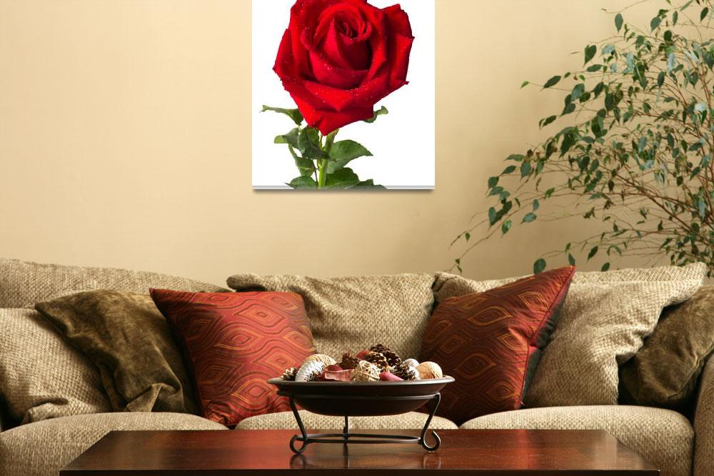 """""""Heart form red rose""""  (2012) by nuttakit"""
