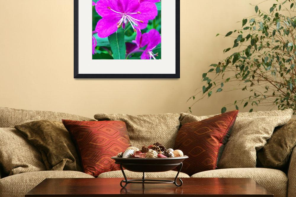 """""""Fireweed Macro&quot  (2009) by copperhead"""