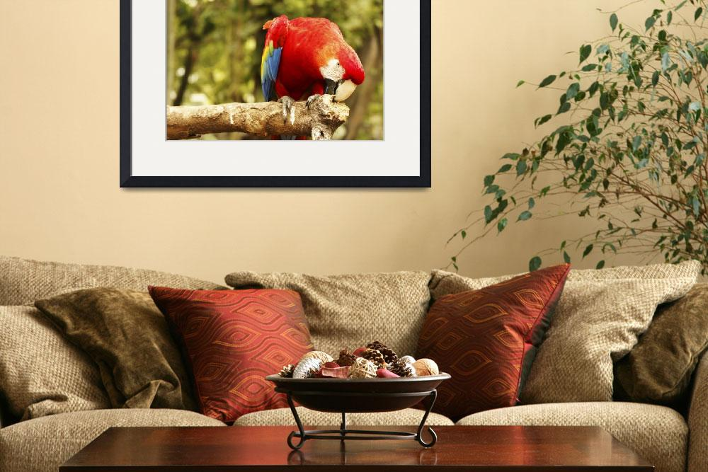 """""""Red blue parrot sitting on wooden branch in forest&quot  by Todikromo"""
