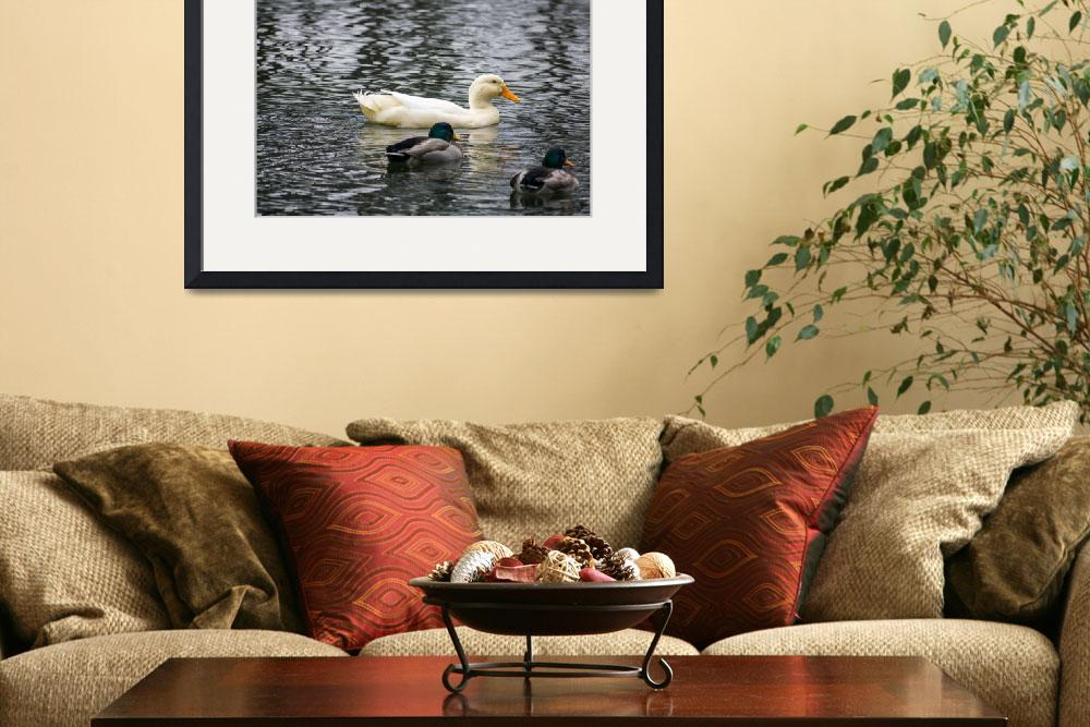 """""""Ducks in the water&quot  by FrankD0024"""
