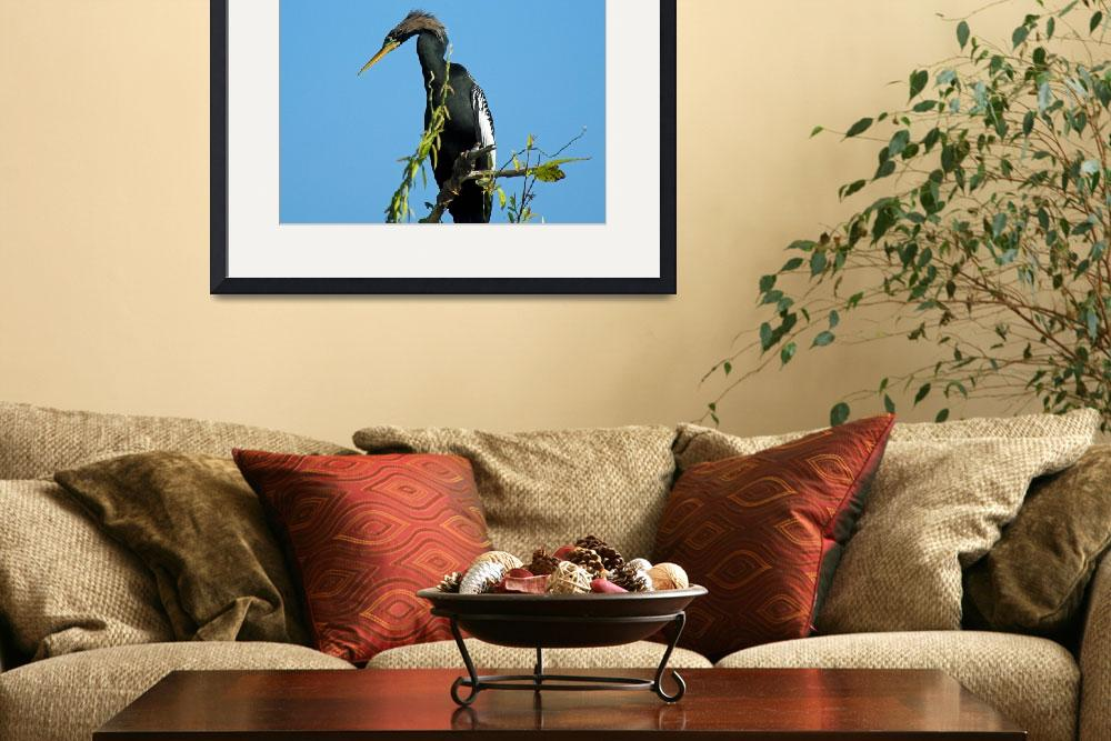 """""""A Florida Anhinga&quot  by tricia"""