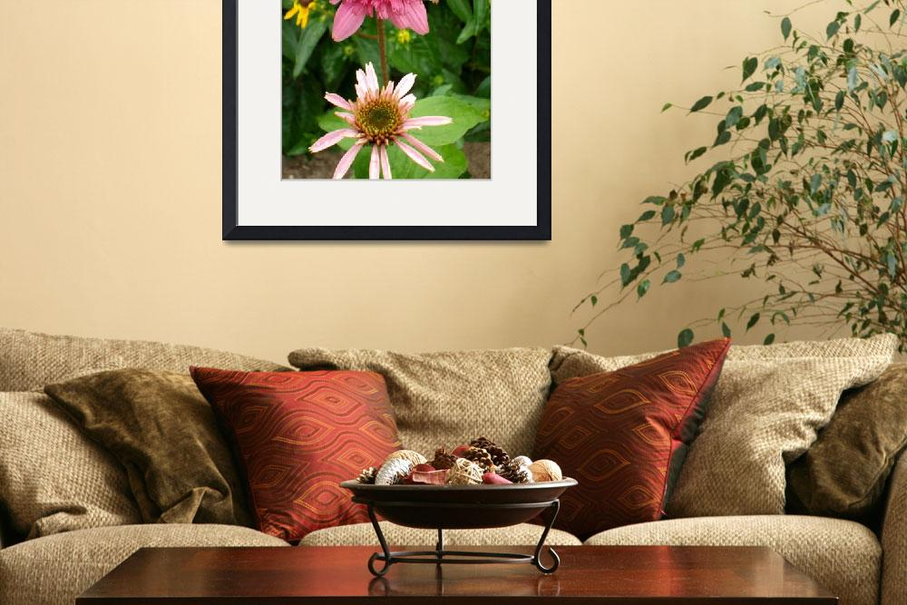 """Echinacea Growing Stages&quot  (2010) by PuddingStoneAlley"
