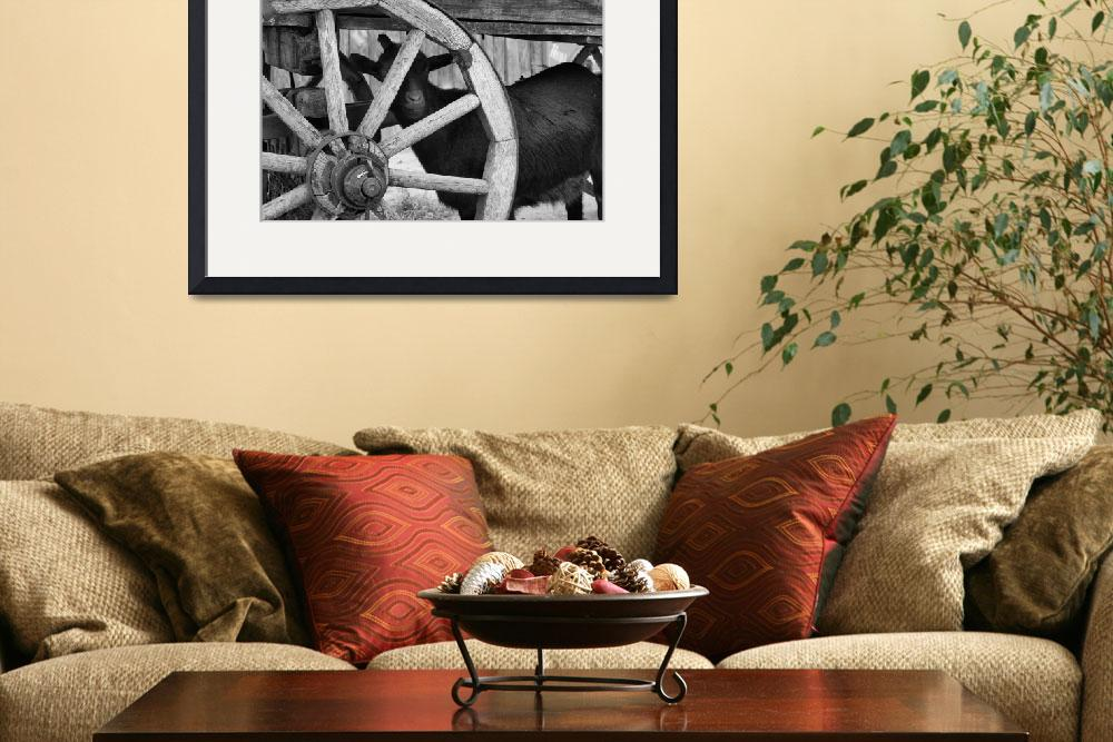 """goat andwheel bw in farm yard""  (2008) by ChrisAndrews"
