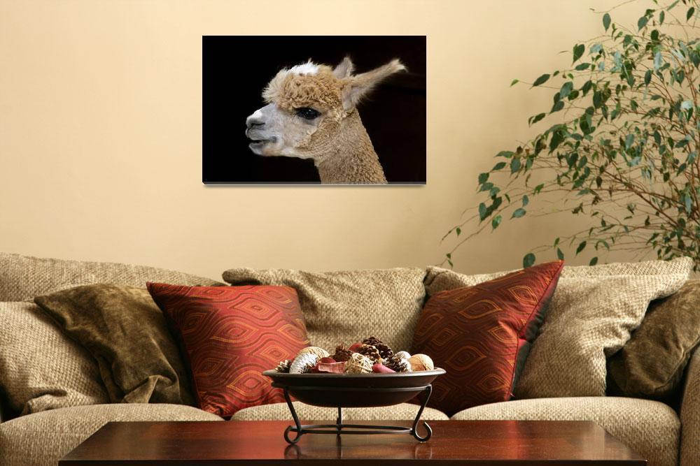 """Alpaca Portrait""  (2012) by walbyent"