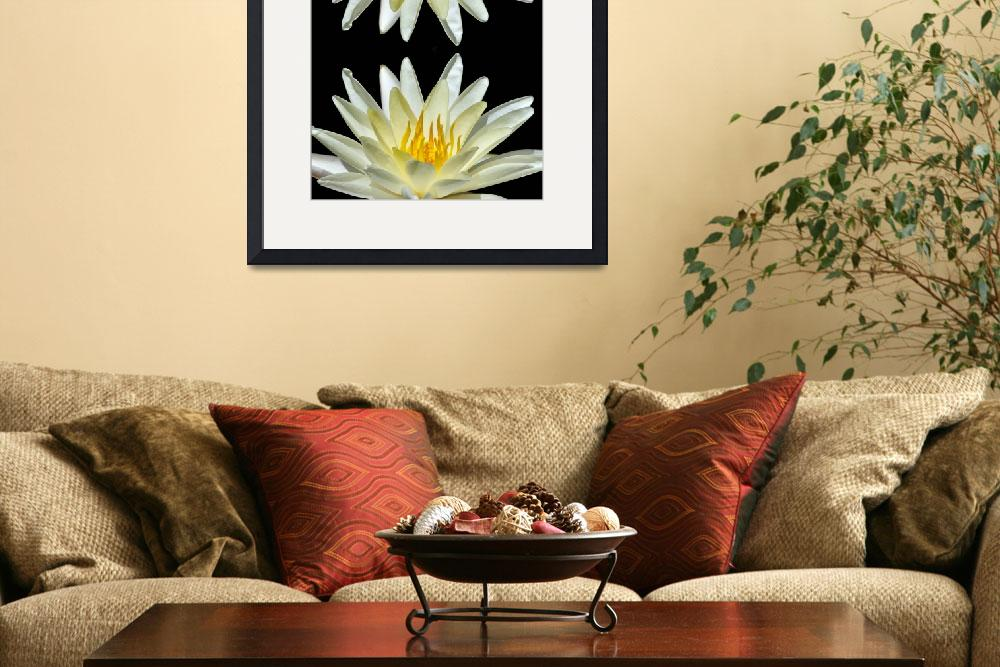 """""""White Water Lily On North South Axis&quot  by McallenPhotography"""